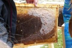 06.April 2013 - Mehr als Honig