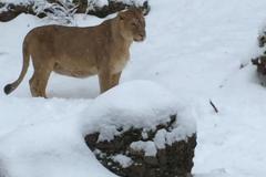 14.Januar 2017 - Besuch im Zoo Zürich