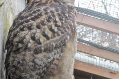 17.März 2012 - Greifvögel