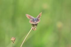 2.Juni 2018 - Papillon, Papillon...