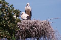 21.Juni 2014 - Wo klappert der Storch?